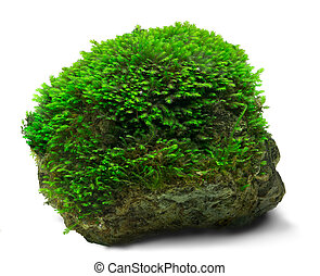 Underwater fissidens moss cover a rock