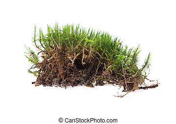 moss and soil on a white background