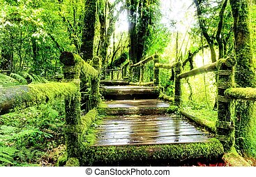 Moss around the wooden walkway in rain forest, Chiang Mai Province, Thailand
