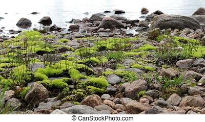 Moss at the lake