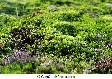 background of fresh green moss