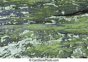 Green moss on a grey rock background