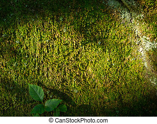 Moss background with sunlight, shadows and leaves