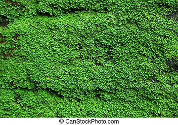 Moss background of a brick wall