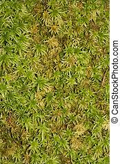 Moss background. . . . . . . . . .