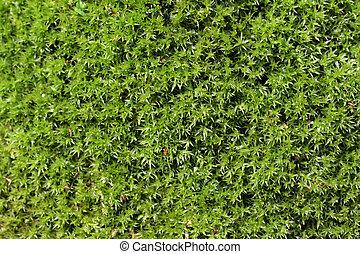 Moss background