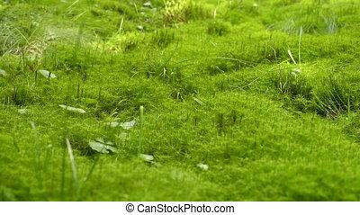Green moss texture background - Moss Background Texture....