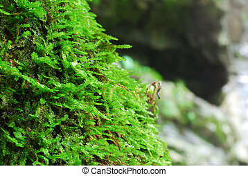 The freshy moss with the stone background