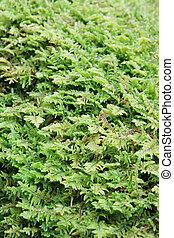 vertical image of green moss for background