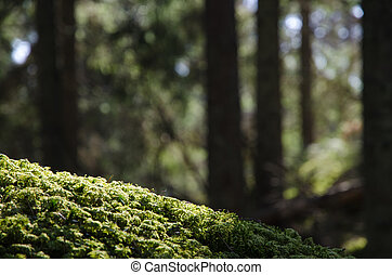 Moss closeup in a forest