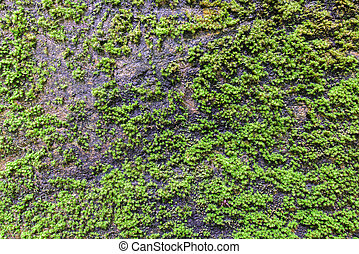 Moss coverd on stone texture in forest.