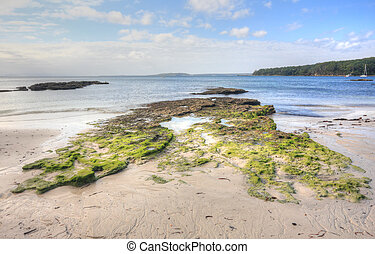 Moss covered rocks and rock pools - Bright green moss...