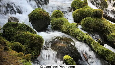 Moss covered rocks in Umpqua River