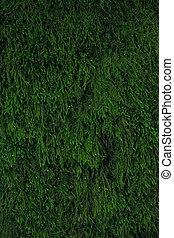 moss., grafické pozadí