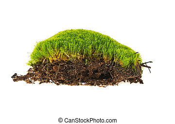 moss ground isolated on white background