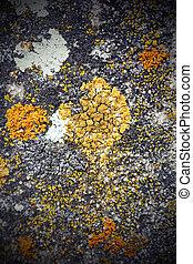 moss growing on stone