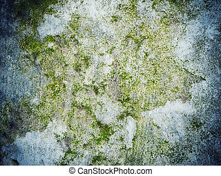 Moss growing on the concrete