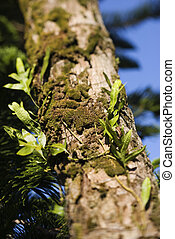Moss growing on tree.
