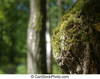 moss grows on an old tree in summer