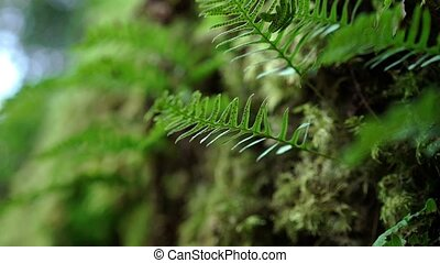 Moss in a forest at summer