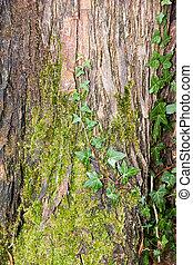moss in a tree