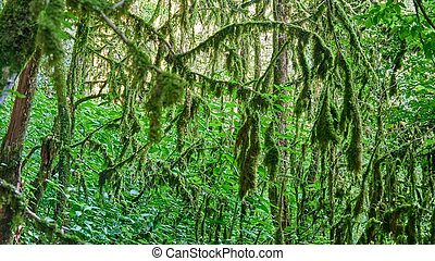 Moss in forest. Sunlight in the branches of trees