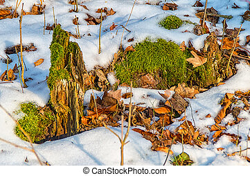 Moss in the snow