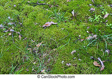 Moss in the swamp