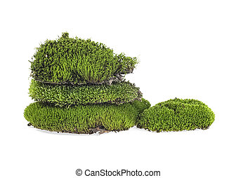 Moss isolated on a white background