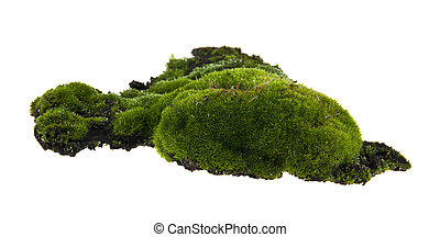 moss isolated on white background
