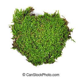 moss isolated on white bakground