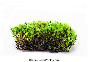 moss isolated on white