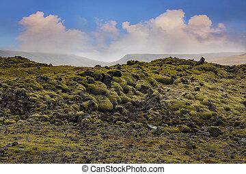 Moss, Mossy Lava Rocks at Katla Geopark, Iceland.