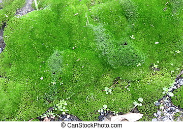 Moss - Natural musk or moss background