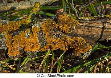 Moss on a dry tree .