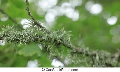 Moss on a green tree