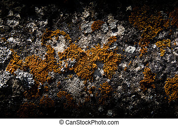 Moss on a rock in the background