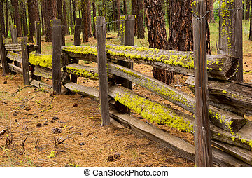 Moss on a Split Rail Fence - Mossy lichens grow on a wooden ...