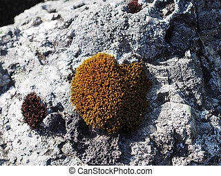 moss on a stone in the shape of heart