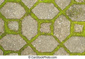 Moss on cement pathway
