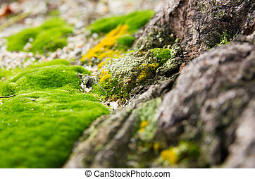 moss on coconut root topsoil