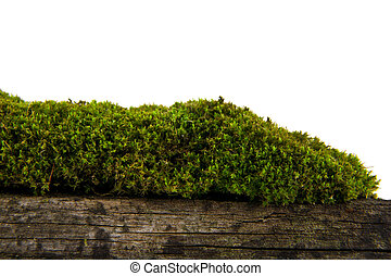 Moss on old wood isolated on white background