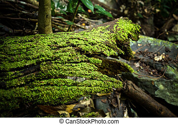 Moss on old wood