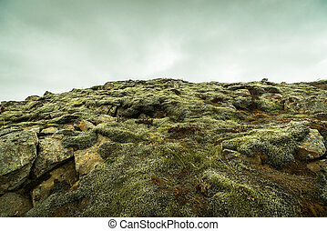 Moss on rocks at a mountain