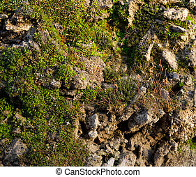 moss on the concrete .
