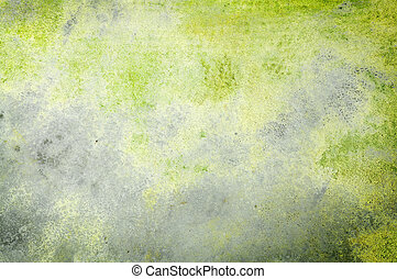 Moss on the grunge wall