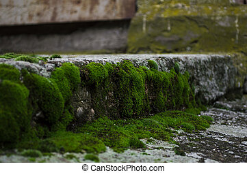Moss on the old stairs