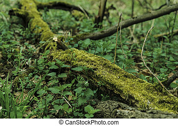 moss on the old tree in the forest