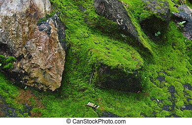 moss on the rock