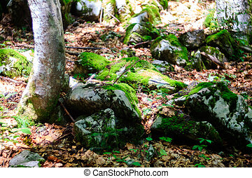Moss on the rocks e in the woodland - Moss on rocks in the...